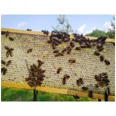 Bičių produktų nauda imunitetui