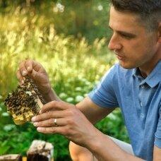 Buckfast bičių motinėlė, apvaisinta (išankstinis užsakymas 2021 m.)