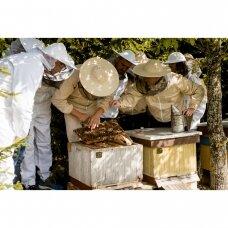 Edukacija apie bičių gyvenimą suaugusiesiems