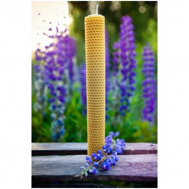 Bičių vaško žvakė iš korio (41 x 3,5 cm) 2